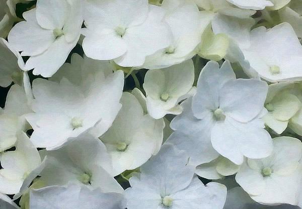 Digital Art - White Blossom by Julian Perry