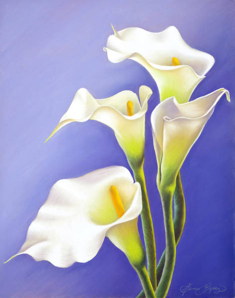 Wall Art - Painting - White Calla Lilies by Gema Lopez