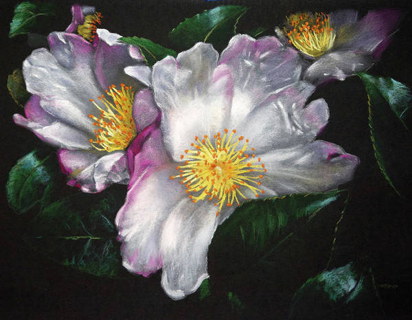 Painting - White Camellias On Black by Christopher Reid