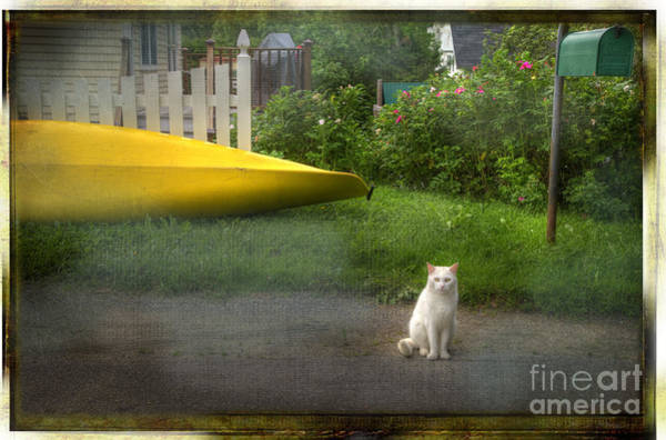 Photograph - White Cat, Yellow Canoe by Craig J Satterlee