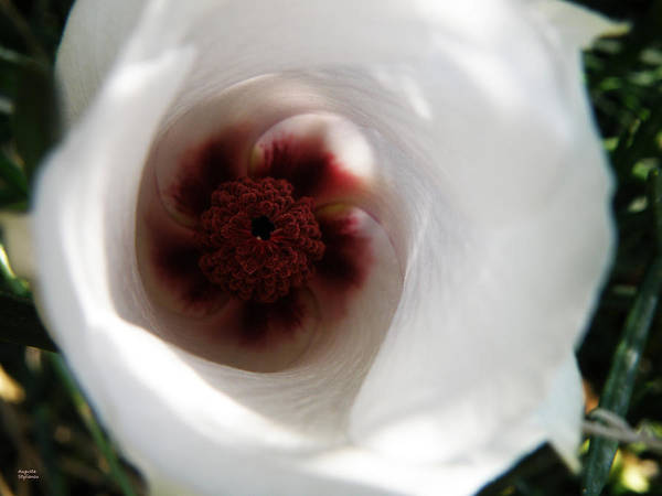 Photograph - White Close-up Flower by Augusta Stylianou