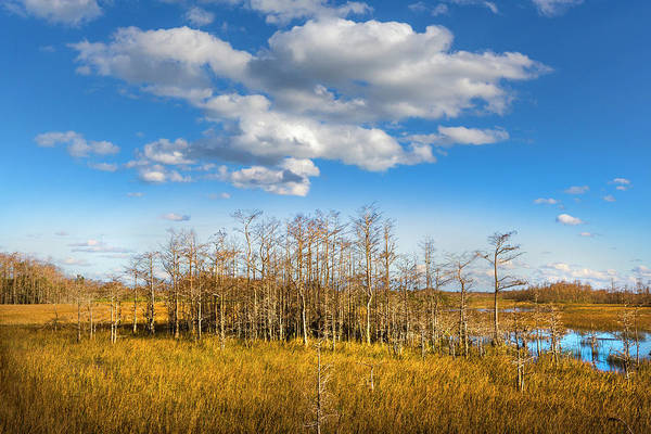 Photograph - White Clouds Over The Cypress Grove by Debra and Dave Vanderlaan