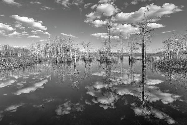 Photograph - White Clouds Over The Everglades Black And White by Debra and Dave Vanderlaan