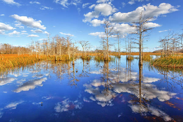 Photograph - White Clouds Over The Everglades by Debra and Dave Vanderlaan