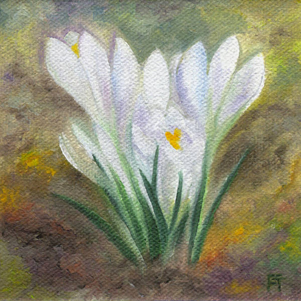 White Crocus Art Print