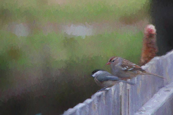 Photograph - White-crowned Sparrow And Chickadee Painting by Ericamaxine Price