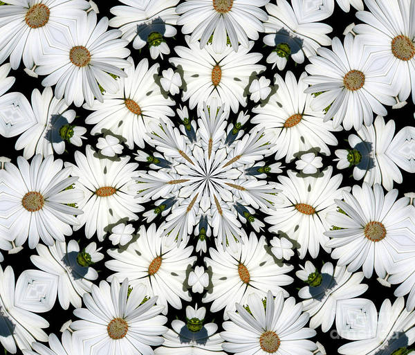 Photograph - White Daisies Mandala Abstract by Rose Santuci-Sofranko