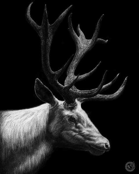 Manuel Wall Art - Drawing - White Deer  by Manuel Canadas