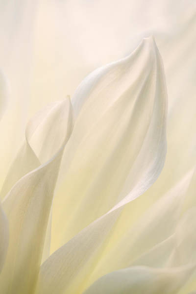 Photograph - White Delicacy by Mary Jo Allen