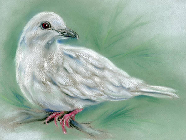 Pastel - White Dove In The Pine by MM Anderson