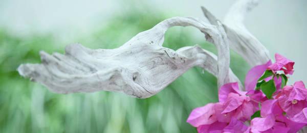 Wall Art - Photograph - White Driftwood by Toni Hopper