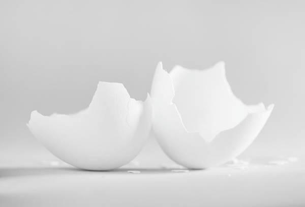 Wall Art - Photograph - White Egg Shell On Soft Grey 2 by Iris Richardson