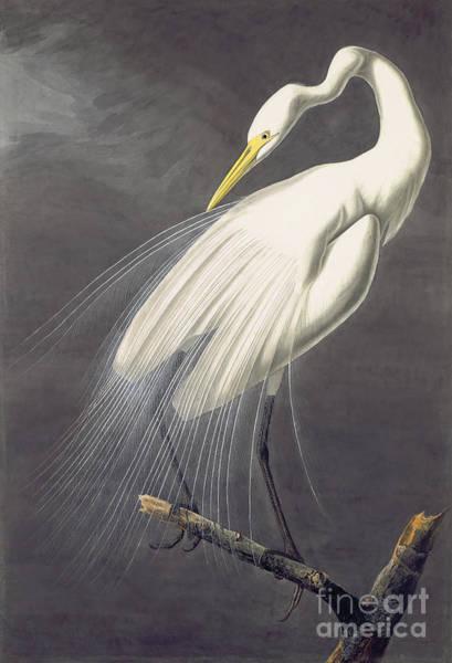 Vertebrate Painting - White Egret, by Celestial Images