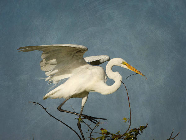 Photograph - White Egret In A Tree by Charles McKelroy