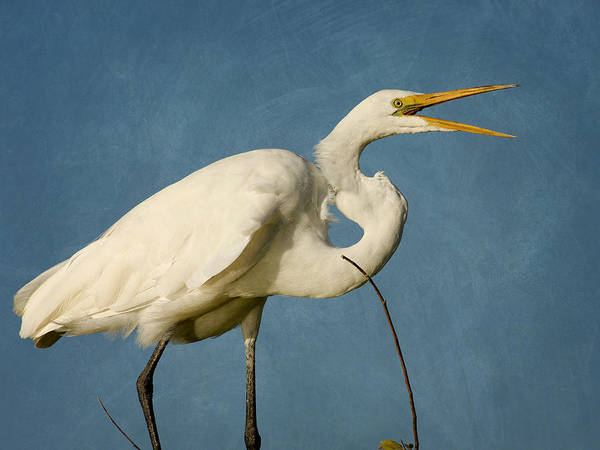 Photograph - White Egret In A Tree II by Charles McKelroy