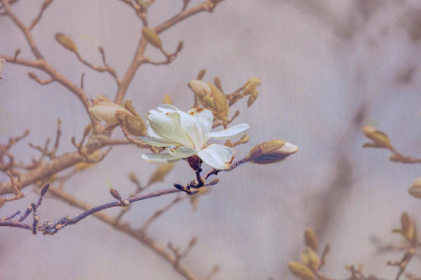Photograph - White #f4 by Leif Sohlman