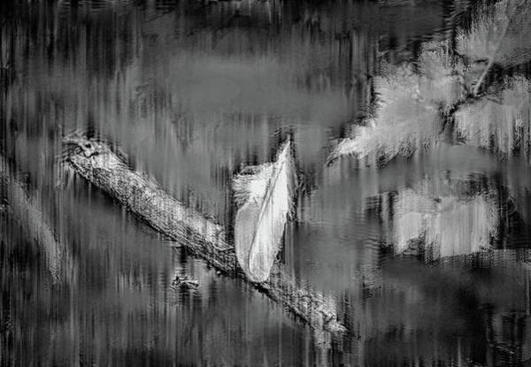 Photograph - White Feather Bw #g7 by Leif Sohlman