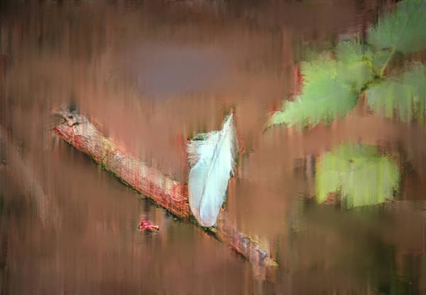 Photograph - White Feather #g7 by Leif Sohlman