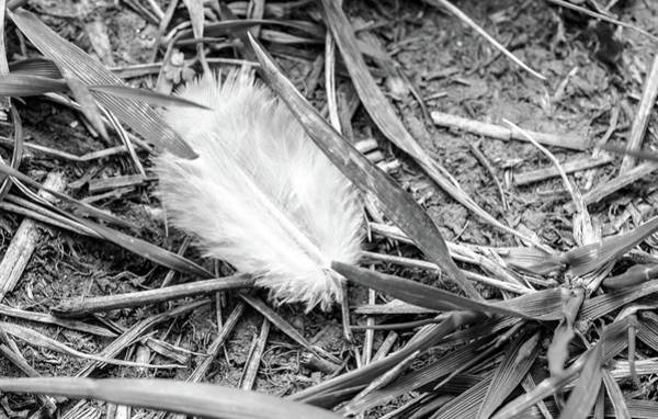 Photograph - White Feather On Grass by Jacek Wojnarowski