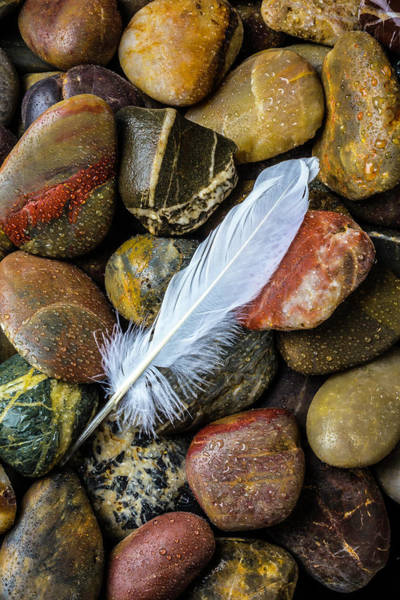 Flight Feathers Photograph - White Feather On River Stones by Garry Gay
