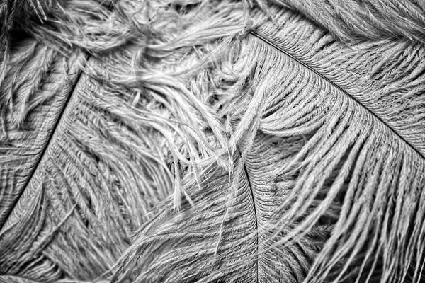 Photograph - White Feathers #2 by Stuart Litoff
