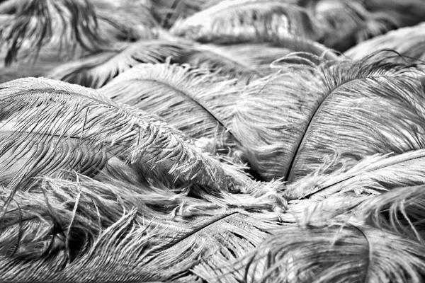 Photograph - White Feathers #4 by Stuart Litoff
