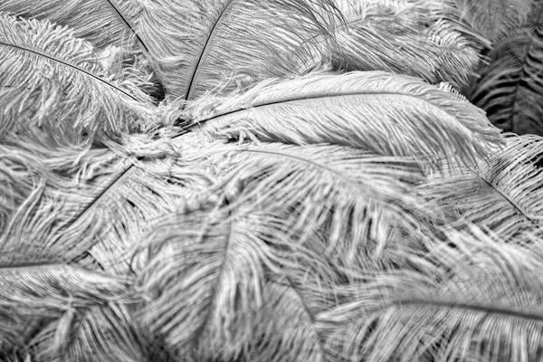 Photograph - White Feathers by Stuart Litoff