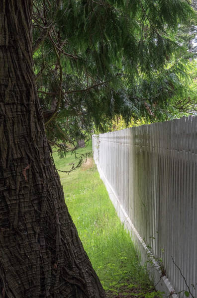 Photograph - White Fence And Tree by Tom Singleton