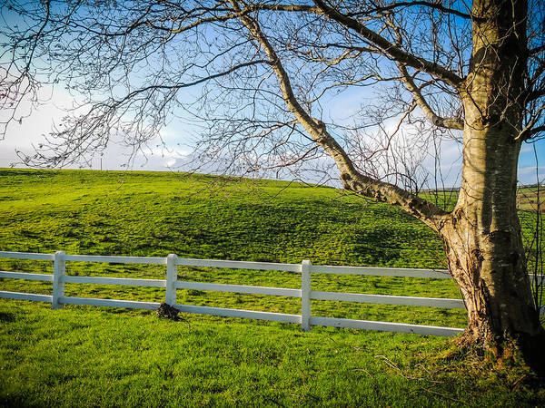 Photograph - White Fence In Green Irish Pasture by James Truett