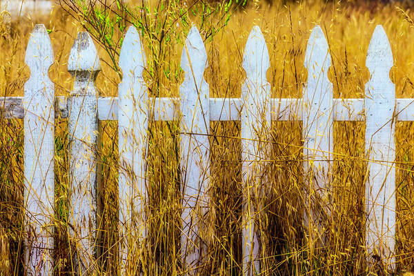 Picket Fence Photograph - White Fence In The Weeds by Garry Gay