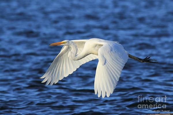 Wall Art - Photograph - White Flight by Winston Rockwell