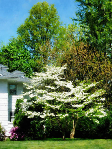 Photograph - White Flowering Tree by Susan Savad