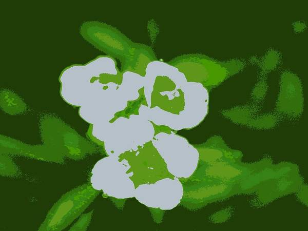 Flower Digital Art - White Flowers by Kumiko Izumi