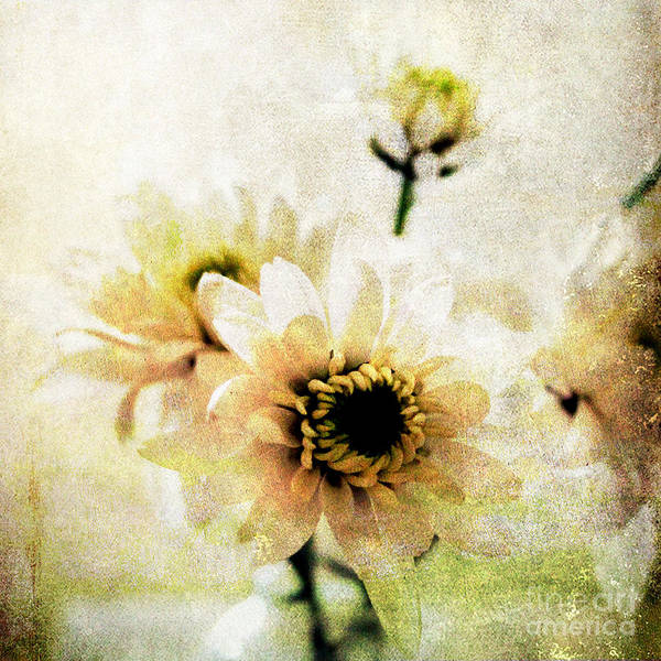Romantic Flower Wall Art - Mixed Media - White Flowers by Linda Woods