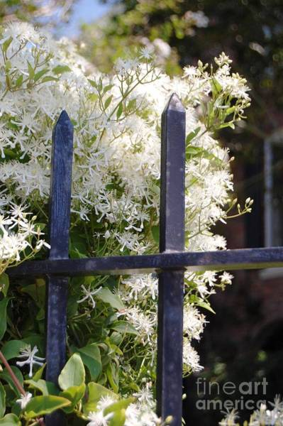 Photograph - White Flowers On Iron Gate by Donna Bentley