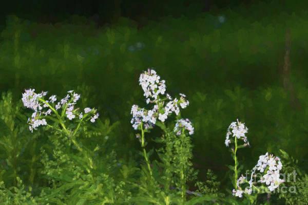 Digital Art - White Fireweed Flowers by Les Palenik