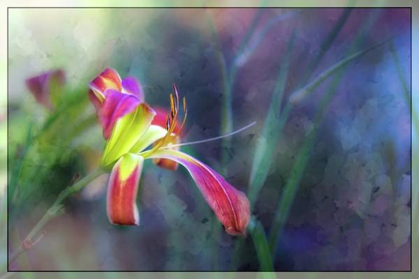 Wall Art - Painting - White Hall Lily by Ches Black