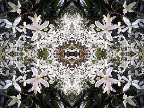 Photograph - White Hedge Flower Mandala 1 by Julia Woodman