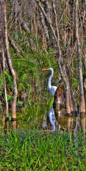 Wall Art - Photograph - White Heron In The Great Cypress by William Wetmore