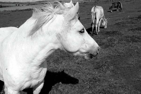 Photograph - White Horse by Aidan Moran