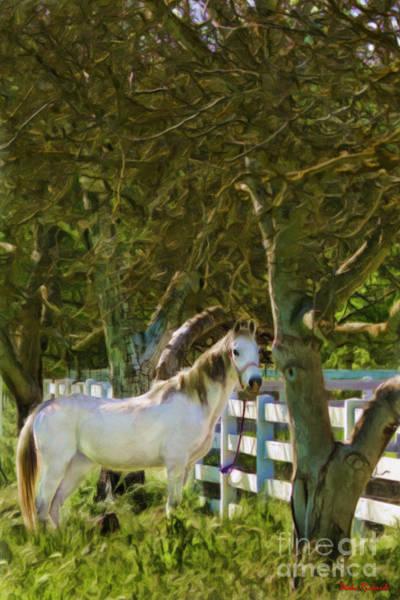 Photograph - White Horse by Blake Richards