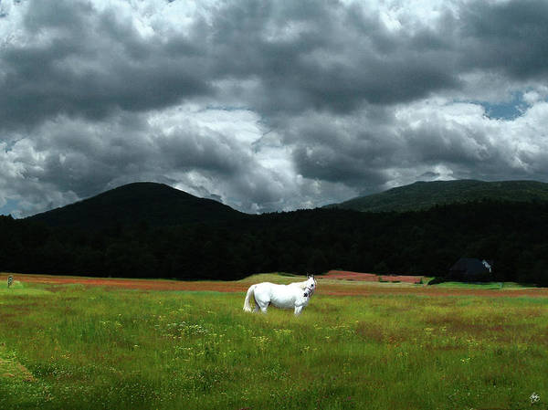 Photograph - White Horse In A Glorious Dream by Wayne King
