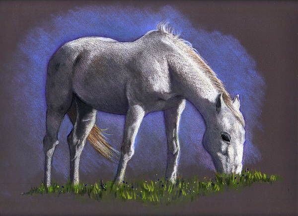 Wall Art - Drawing - White Horse Grazing by Joyce Geleynse