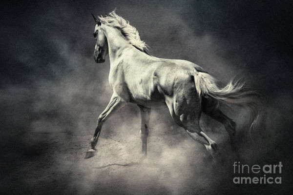 Photograph - White Horse In Dust Equestrian Beauty by Dimitar Hristov