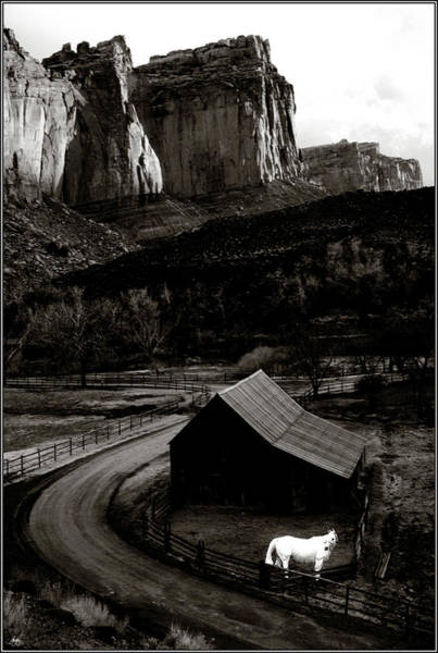 Photograph - White Horse Monochrome In Canyonlands by Wayne King