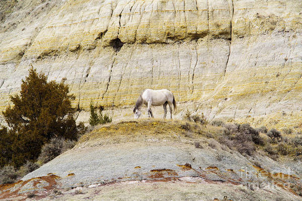 Wall Art - Photograph - White Horse On A Mound by Jeff Swan