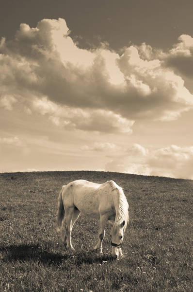 Wall Art - Photograph - White Horse by Stanislovas Kairys