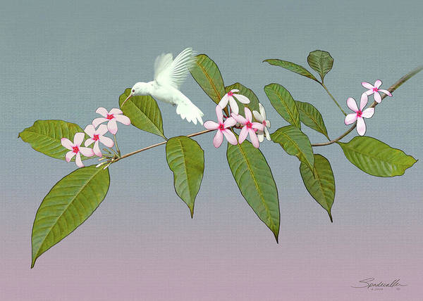 Wall Art - Digital Art - White Hummingbird And Kopsia by M Spadecaller