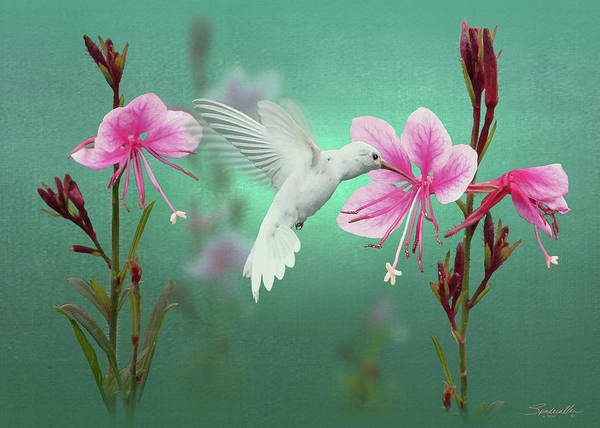 Wall Art - Digital Art - White Hummingbird And Pink Guara by M Spadecaller