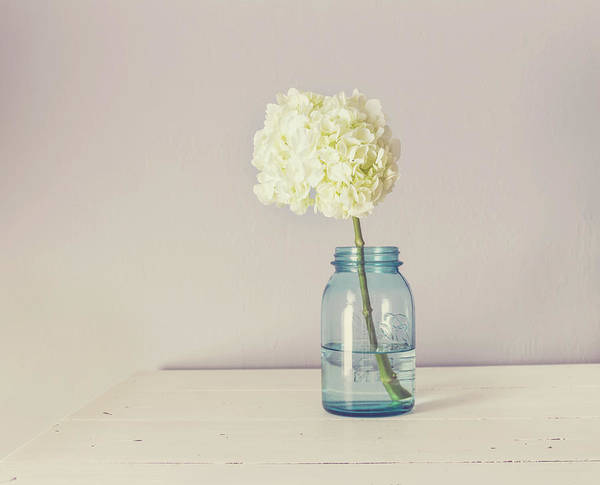 Photograph - White Hydrangea by Kim Hojnacki